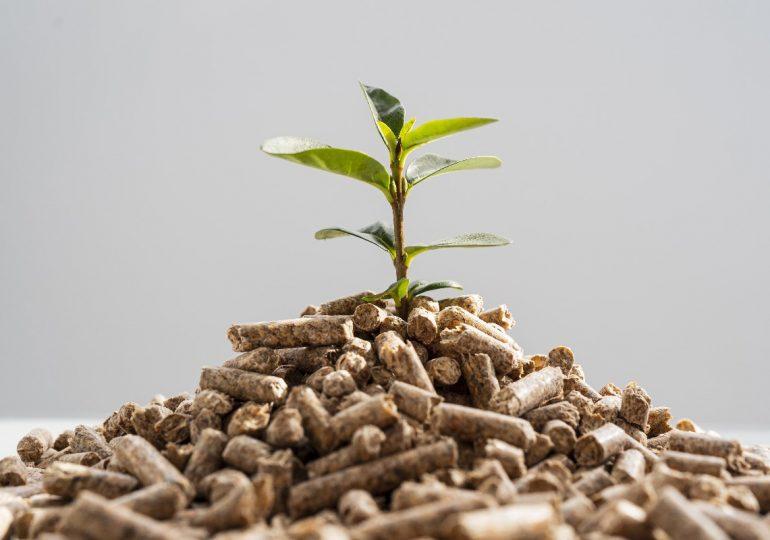 Pellet drzewny - ekologiczny i ekonomiczny opał